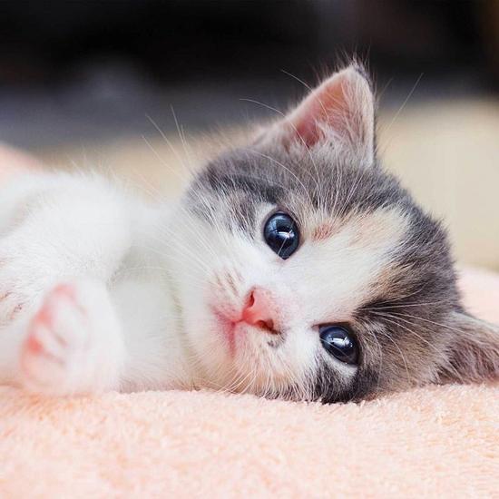 Obrázok z Povlak na polštářek Kitten 40x40 cm